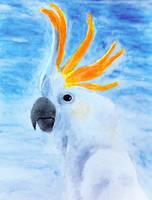 Cockatoo by grini