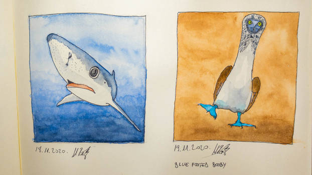 Shark and Blue footed booby