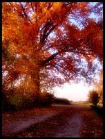 Autumn by grini