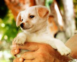 Puppy by hecatelila