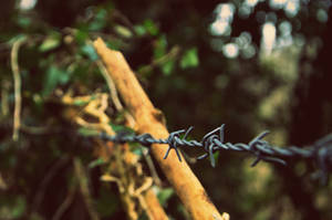 fenced away from my dreams by vicxkyz