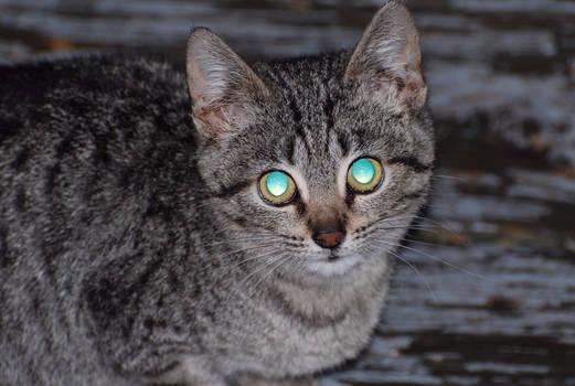 Cat Eyes At Night (Unedited)