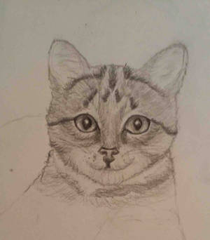 I Can't Draw Cats (wip)