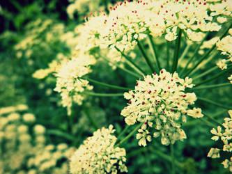 Flowery Pompoms by LittlePenguinTula