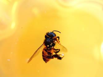 bee and honey by Adrahkinam