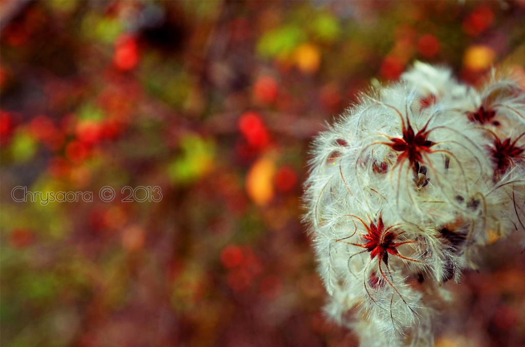 0010 by JellyChrysaora