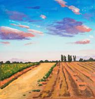 Kent Fields Summer Sunset by chrisjrichards