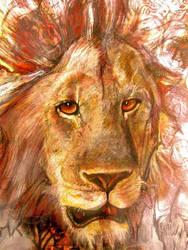 LION'S STARE by moisessurielart
