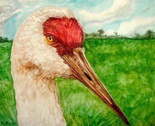 sandhill crane by moisessurielart