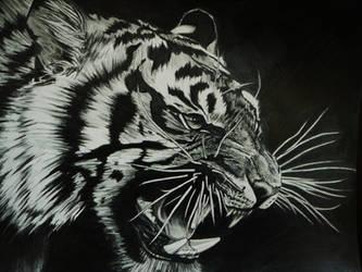Tiger by Babo-Ryan