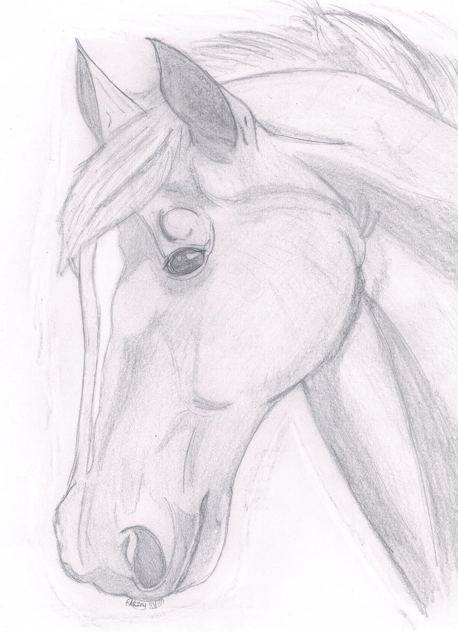 Drawings of horses heads in pencil dating 7