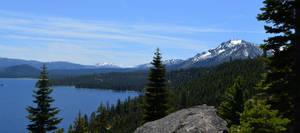 Tahoe Trees2