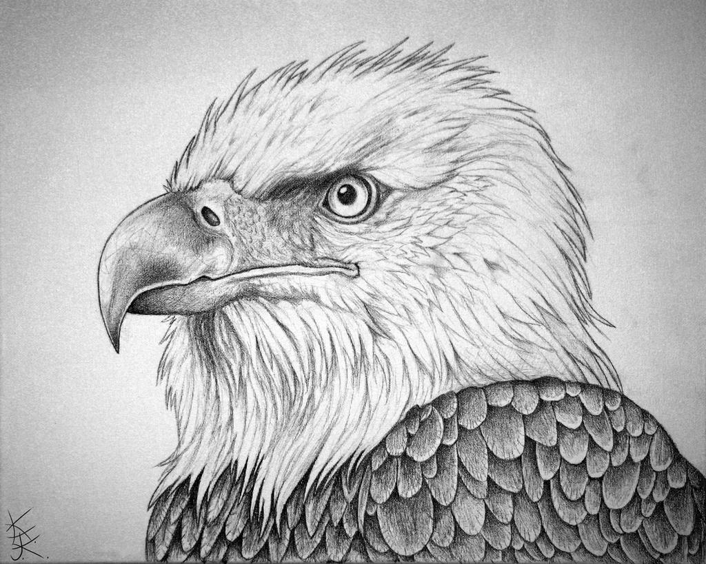 Pencil Drawings: Pencil Drawings Bald Eagles