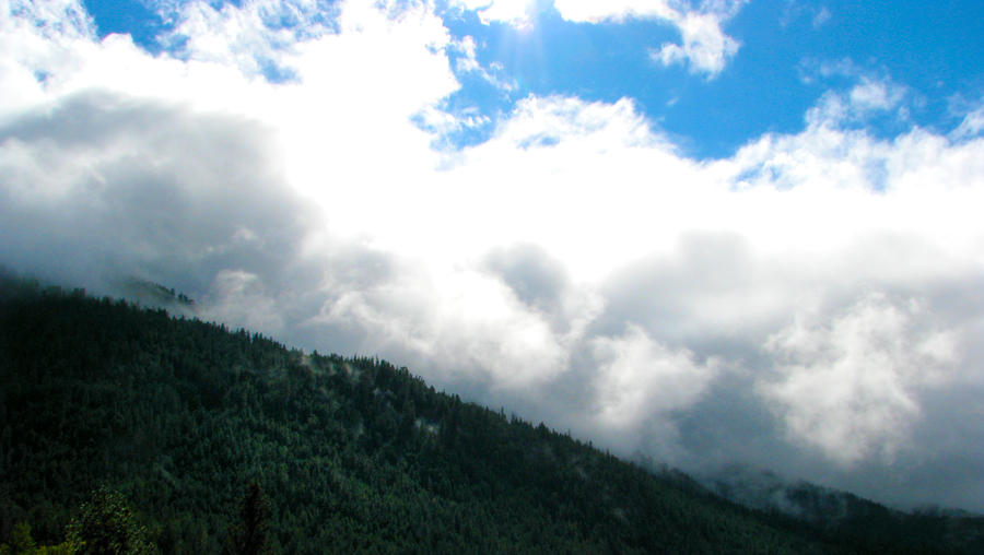 Forest Mountains in the Clouds