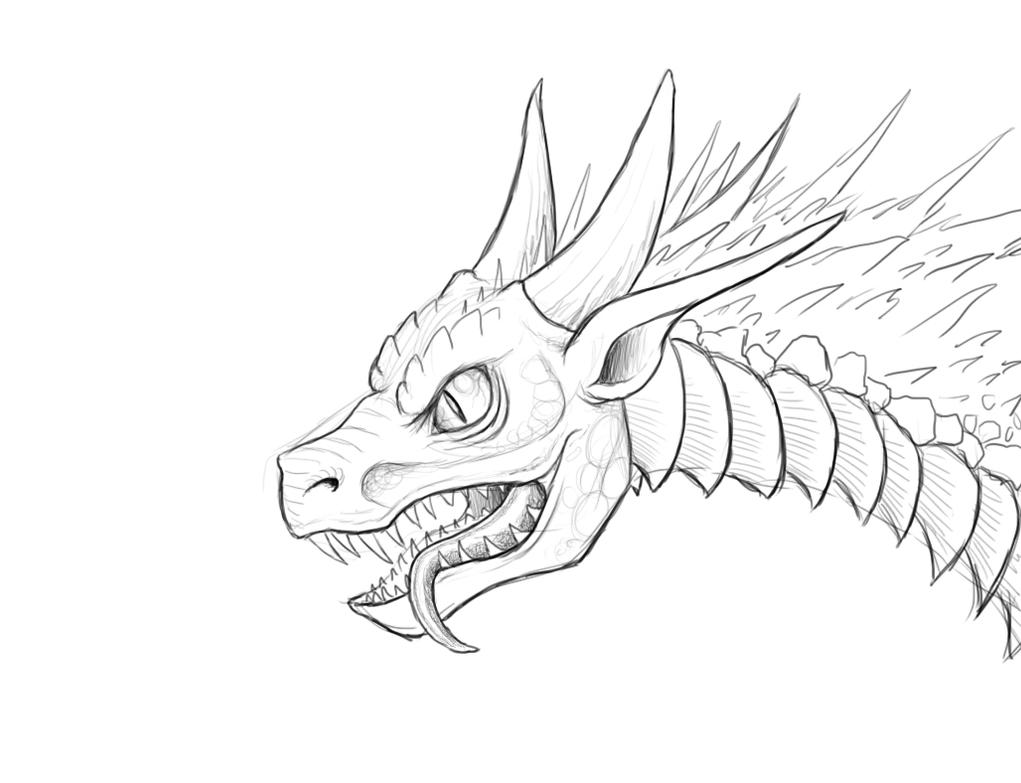 Dragon Portrait Sketch By Techdrakonic Dragon Portrait Sketch By  Techdrakonic On Deviantart How To Draw A