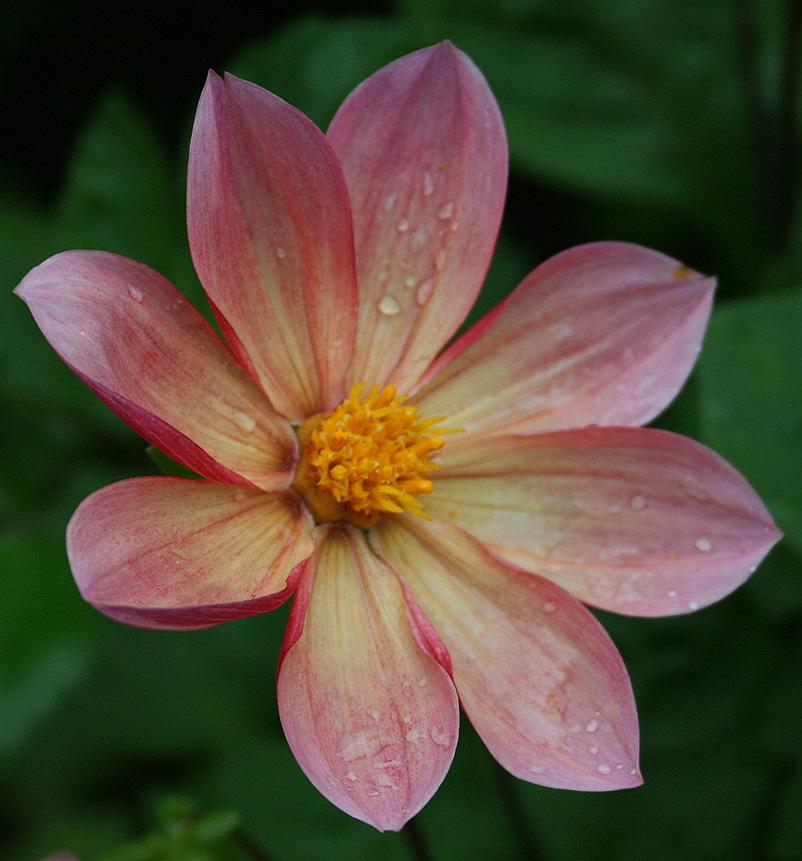 flower 7 by EphemeralMind