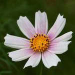 flower 154 by galimzyanova