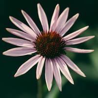 flower 197 by galimzyanova