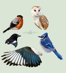 Birdies by bdequine