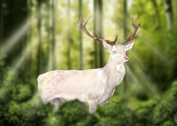 White stag by bdequine