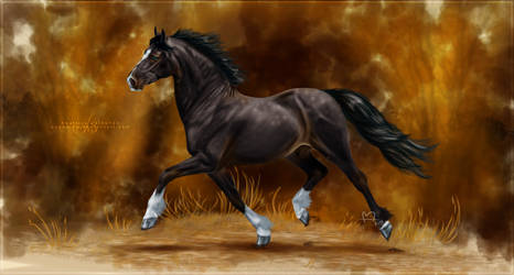 Welsh cob by bdequine