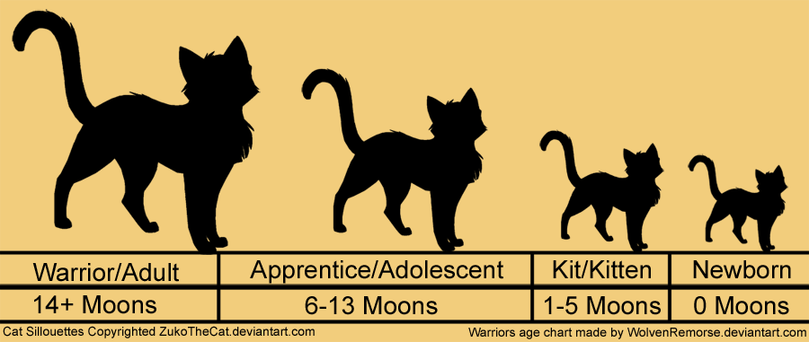 Возраст котят в картинках