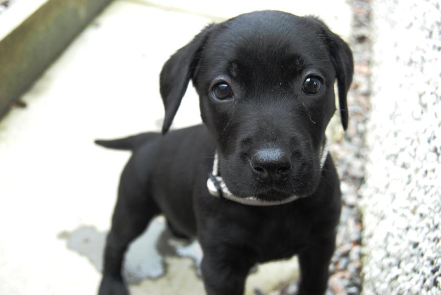 Black Canvas Dog Collar