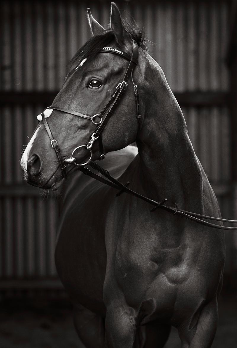 portrait of an ex racehorse II by equinelovex on DeviantArt