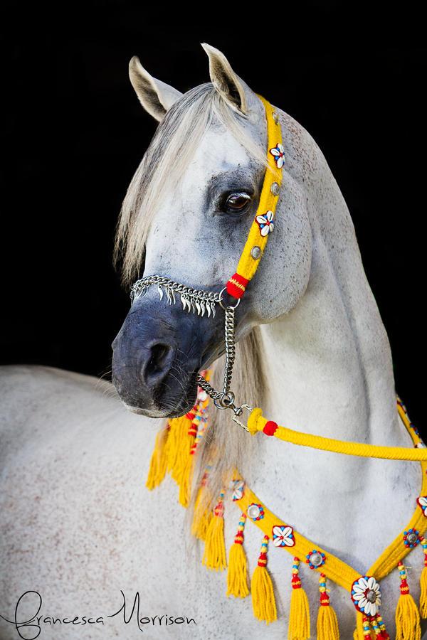 Om El Bahreyn by equinelovex