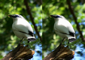 Stereogram Bird by QuickStopMe