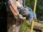 OOAK Cheshire Cat ( by Vladimir Sukhanov )