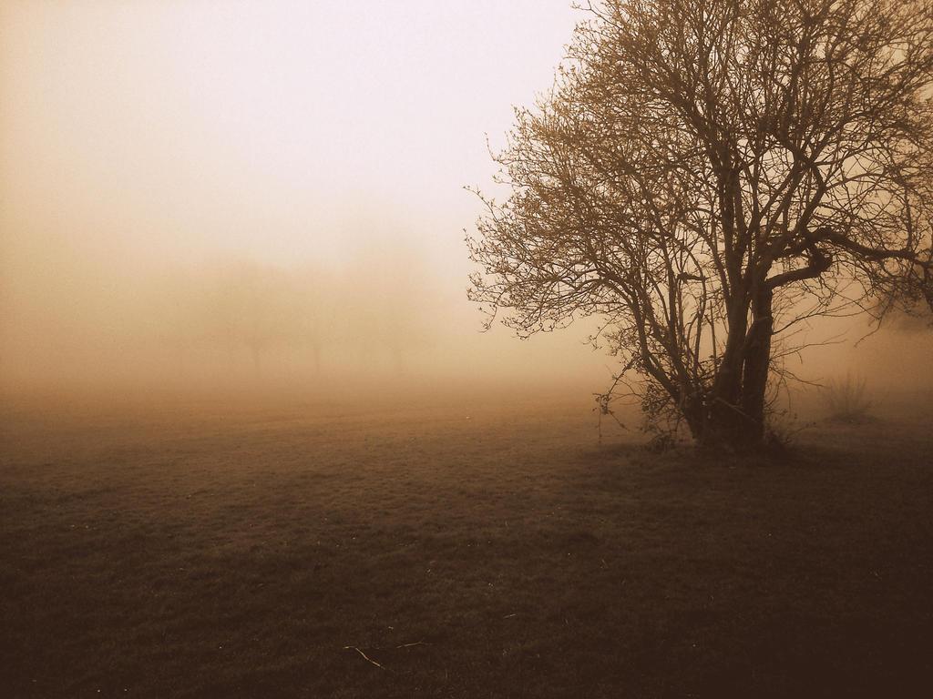 Misty Morning by FadinLightz