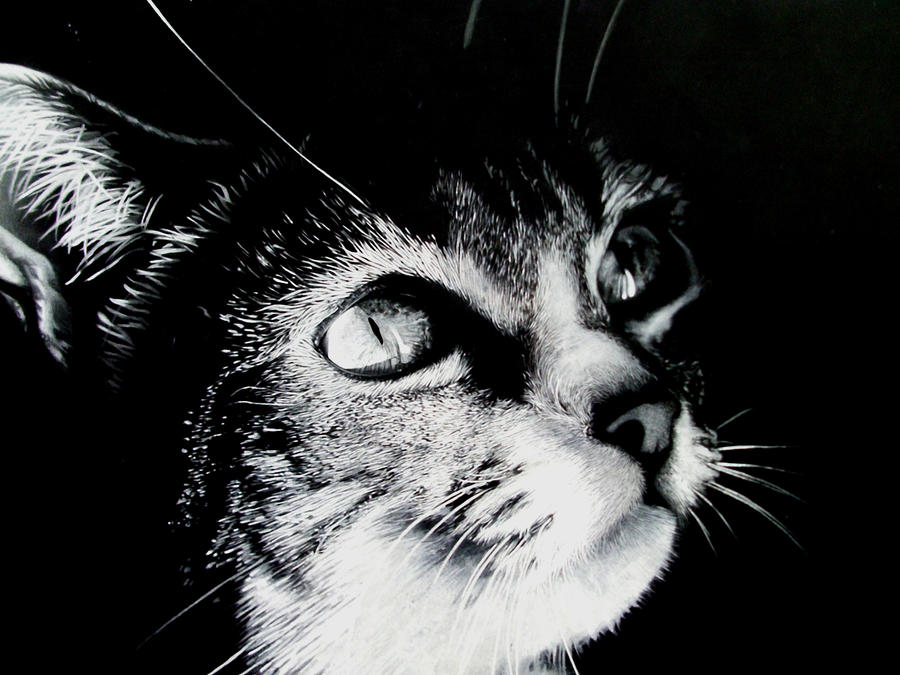 Cat portrait by JacopoPfrang