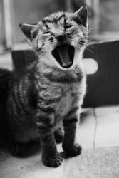 Yawn by myx-korvine