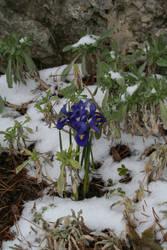 Spring agian