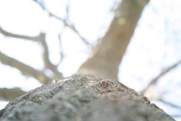 Oak Tree - upward highexposure