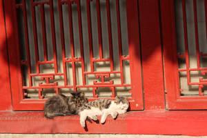 lazy afternoon by Wangyunteng