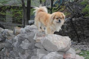 sad dog by Wangyunteng