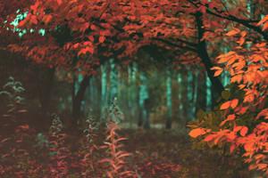Autumn forest by dammmmit
