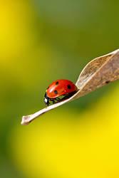 Ladybugs Life