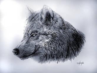 Wolf by Anwar-Nieninqe