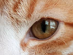 Cat Eye by Hilde-Stock