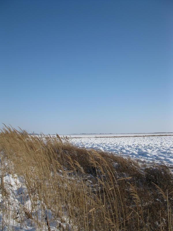 Field under snow1 by Linden-Oak