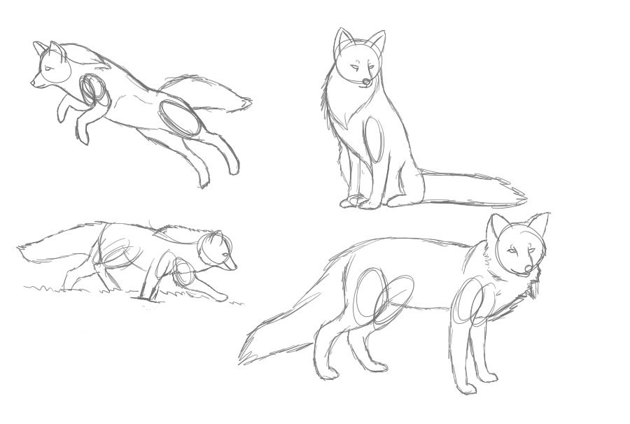Red Fox Anatomy