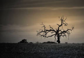 lonely tree by life-flashes