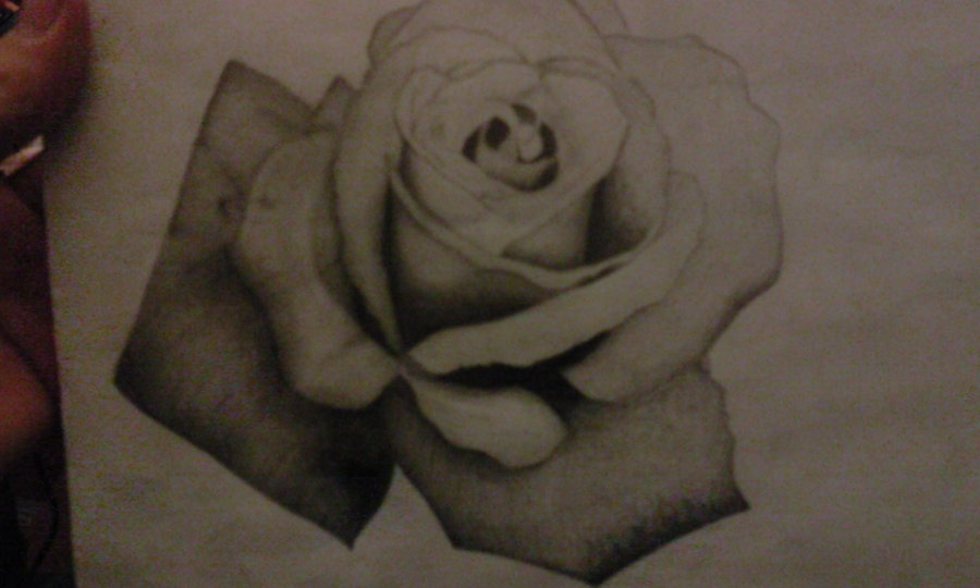 Rose Drawing by PeteDomoney