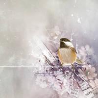 Chickadee by kuschelirmel