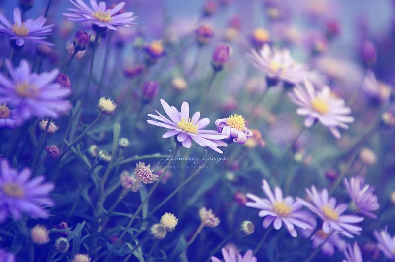 In Bloom by kuschelirmel