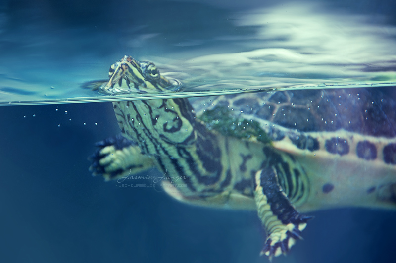 Sea Turtle by kuschelirmel
