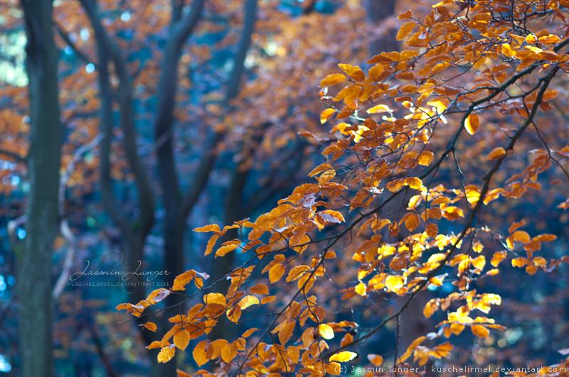 Autumn Woods II by kuschelirmel